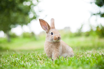 Bunny rabbit on the grass Wall mural
