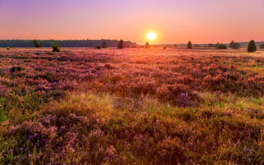 Sunset in the Luneburg heather Wall mural