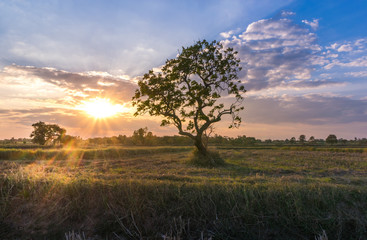 abstract nature magical sunrise with tree background.