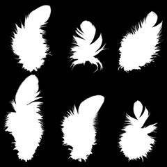 Set of silhouettes of bird feathers. Vector.