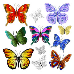 multicolored butterflies
