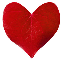 Red leaf heart shaped. Valentine's Day concept.