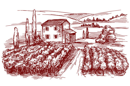 Vineyard hand drawn vector illustration realistic sketch