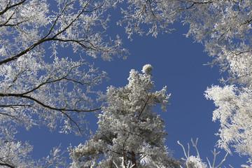Fairytale snowy winter countryside with blue Sky in Bohemia, Czech Republic