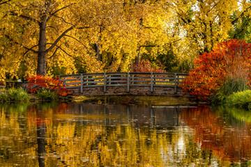 Photo sur Aluminium Automne Fall Colors in Outdoor Park