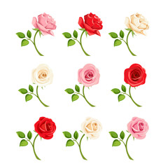 Vector set of red, pink and white roses with stems isolated on white.