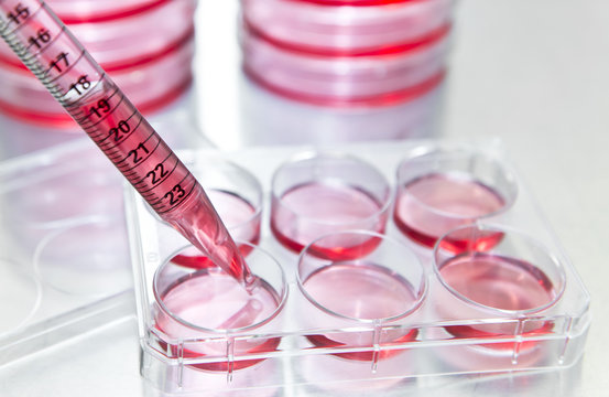 Researcher changes growth medium into the 6 well plate for subculturing mammalian cells