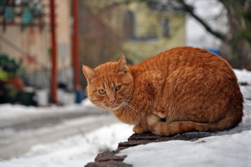 Portrait of red tabby stray cat sitting on stone pedestal in the winter.