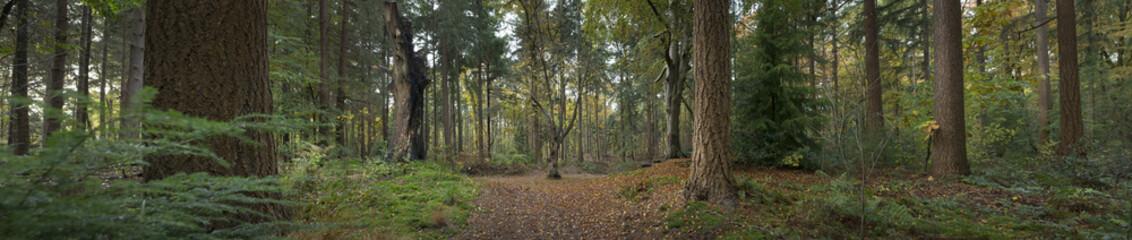 Forest Maatschappij van Weldadigheid Netherlands