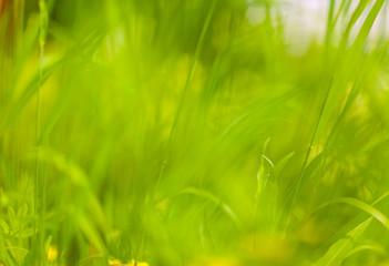 blurred green grass
