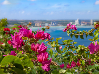 A bougainvillea in a southern island (Guam) 南の島(グアム)のブーゲンビリアと青い海