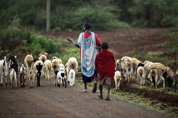 Kenyan family Masai herding goats