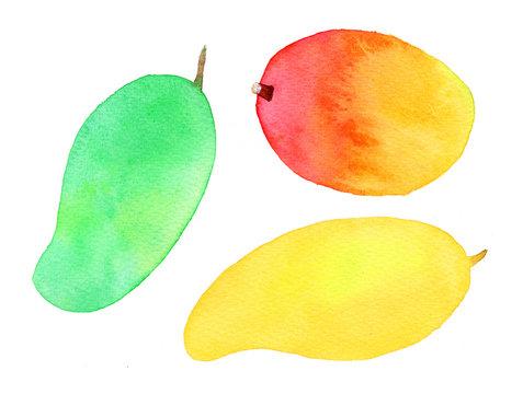 Mango watercolor illustration.