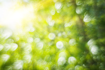 Abstract blurry spring nature bokeh background