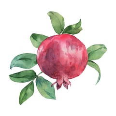 Ripe pomegranate on the branch. Watercolor illustration. Handmade drawing. Isolated on white