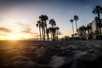Palm trees silhouettes and Santa monica walkway