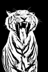 Tiger roar stencil art