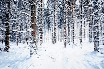 Verschneite Nadelwälder im Harz