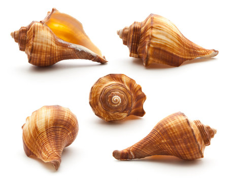 Collection sea shell isolated on white