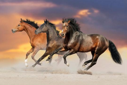 Three bay horse run gallop in desert dust