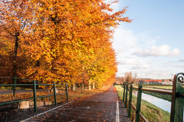Autumn in the Netherlands with beautiful colors