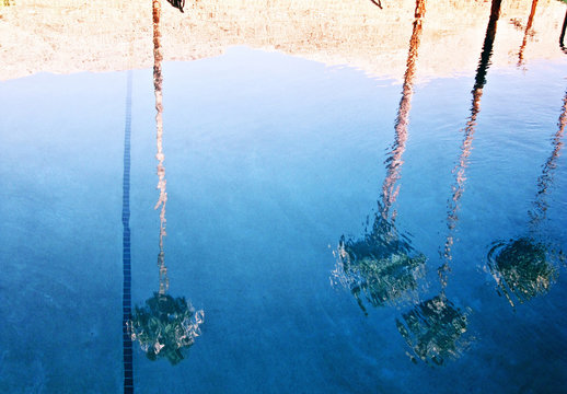 Palm trees reflected in water, Palm Springs, California, USA