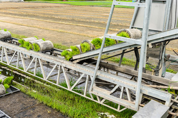 Transportation forwarders Young rice sprout From the box to the