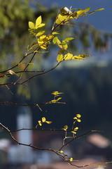 Blätter in der Abendsonne