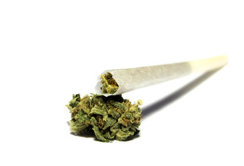 Medical marihuana bud with rolled joint on white background