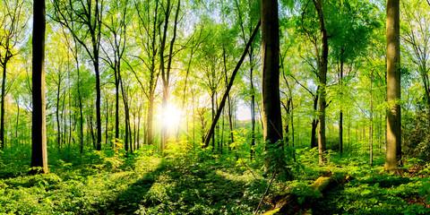 Frühling im Wald bei strahlendem Sonnenschein