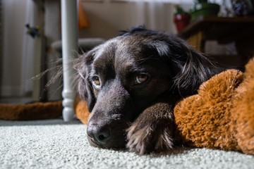 Black Dog and his Toy