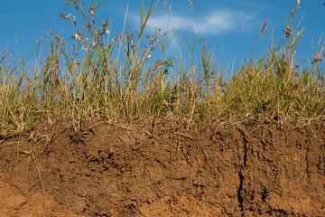 Meadow soil slice