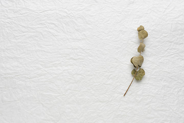 dried buds of leaf on a white background