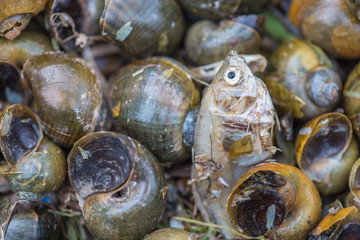 snails carcass and death fish