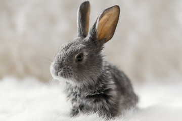Little rabbit on a white background