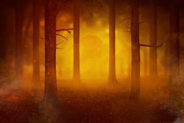 Temperature rise impact to the fires in the forest