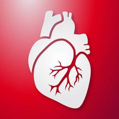 Herz-Darstellung auf rotem Hintergrund / Vektor