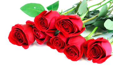 red roses laying on white background