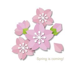 Paper style sakura design