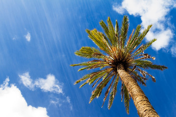 Palma de Las Palmas