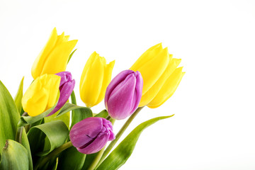 Bouquet of yellow and purple tulips