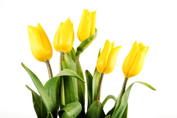 Bouquet of yellow tulips on white