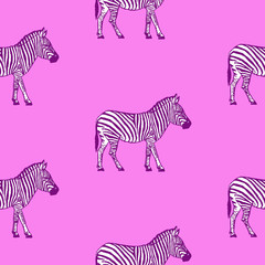 Seamless pattern with hand drawn zebra vector illustration. Pink background.
