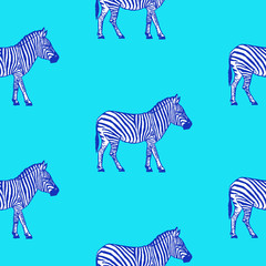 Seamless pattern with hand drawn zebra vector illustration. Blue background.