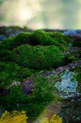 The moss on old tree