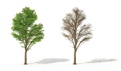 Set of trees with leaves and without its. 3d illustration