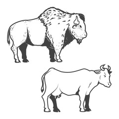 Cow and buffalo icons isolated on white background. Bizon.