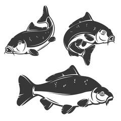 Set of carp fish icons isolated on white background.
