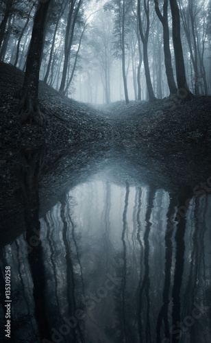 """""""Forest reflection on water surface. Lake in dark scary ..."""