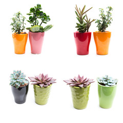 green plants in flower pots on white background